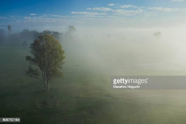 Foggy morning in the Scenic Rim Region, Queensland, Australia