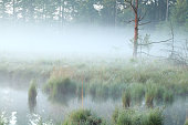 foggy morning on swamp in summer