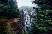 This is the picture of Myrtle fallas in a foggy day at Mt Rainier National Park, Seattle, Washington.