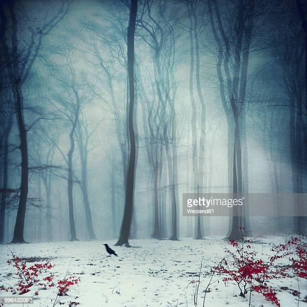 Foggy winter forest, digitally manipulated