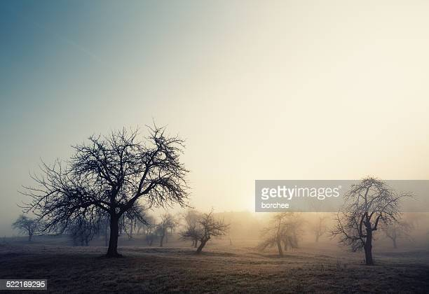 Brumeux matin d'hiver