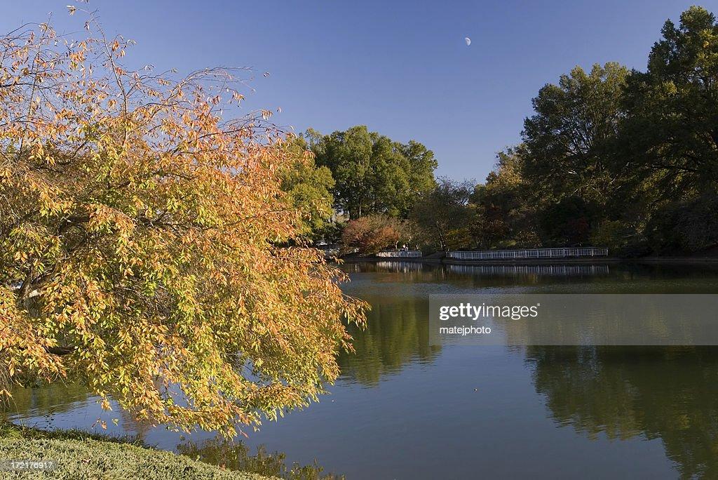 Foliage at Pullen Park