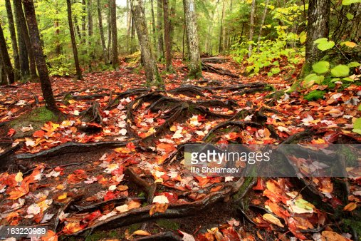 Foliage covered forest ground after storm