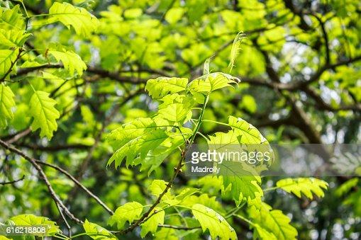 Foliage in the park : Stockfoto