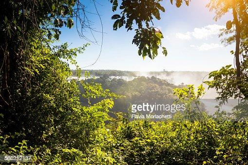 Foliage window in Iguacu National Park