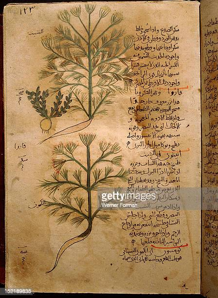 Folio 124r of the Arabic version of Dioscorides De Materia Medica Anethum graveolens Islamic 987 990 Samarkand