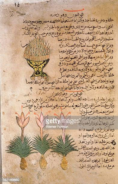 Folio 14r of the Arabic version of Dioscorides De Materia Medica Bowl of burning kyphi and Crocus sativus Islamic 987 990 Samarkand