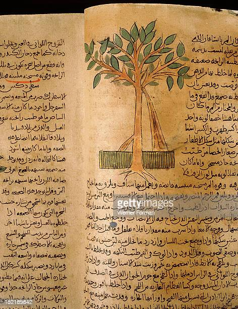 Folio 15v of the Arabic version of Dioscorides De Materia Medica Myrrh Islamic 987 990 Samarkand