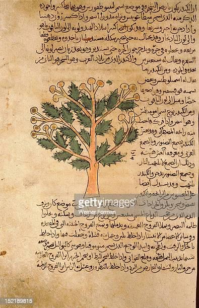 Folio 17r of the Arabic version of Dioscorides De Materia Medica Boswellia Islamic 987 990 Samarkand