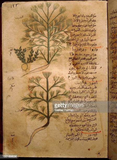 Folio 37r of the Arabic version of Dioscorides De Materia Medica Rosa sempervirens and Henna Islamic 987 990 Samarkand