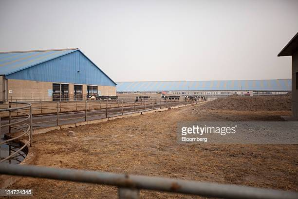 Fonterra Cooperative Group Ltd's Tangshan farm is seen in Tangshan Hebei Province China on Wednesday Feb 24 2011 Fonterra the world's largest dairy...