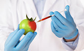 Food genetic modification concept. Close up of sciencist injecting syringe into tomato