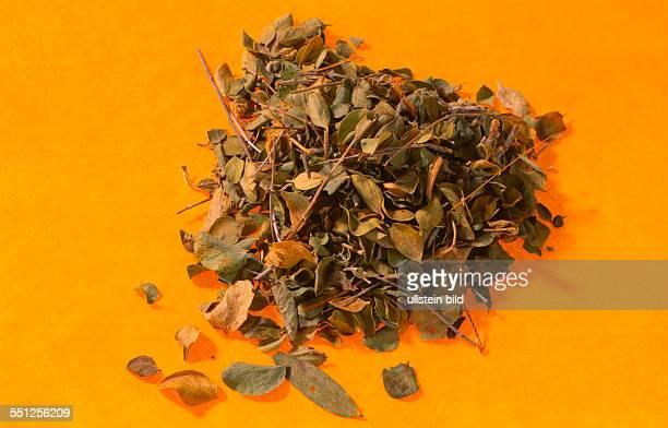 Food spices Oregano