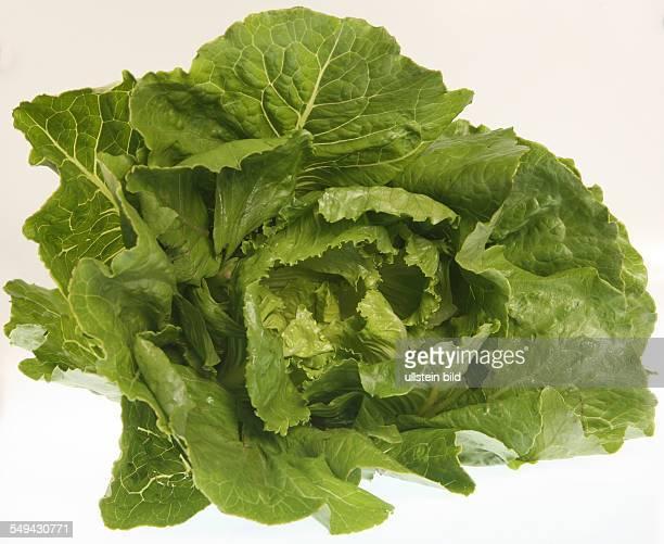 Food vegetables Lettuce
