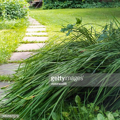 Foot Path In A Garden : Stock Photo