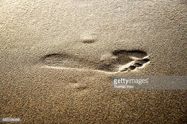 Foot Print in wet sand