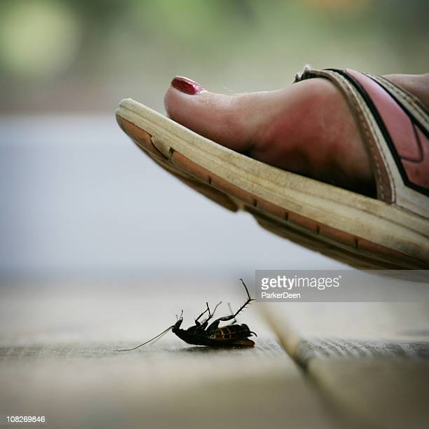 Foot Stepping on Roach