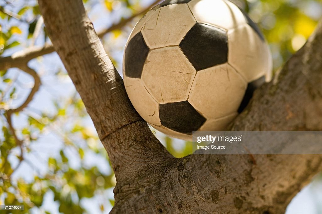 Football in a tree