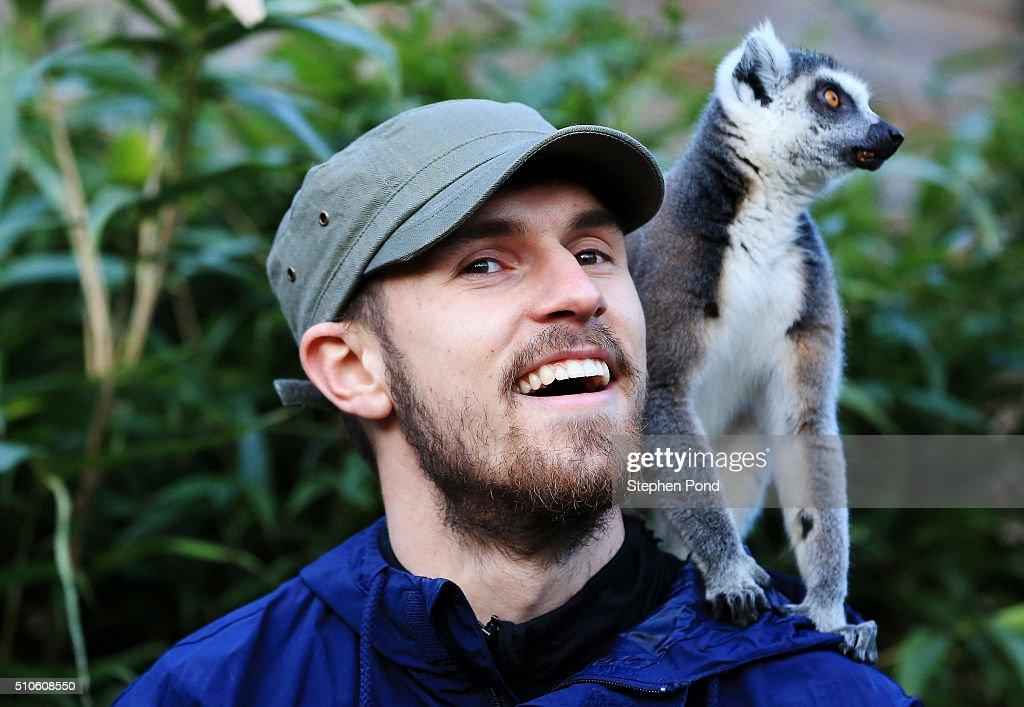 Footballer <a gi-track='captionPersonalityLinkClicked' href=/galleries/search?phrase=Aaron+Ramsey+-+Soccer+Player&family=editorial&specificpeople=4784114 ng-click='$event.stopPropagation()'>Aaron Ramsey</a> visits Colchester Zoo on February 10, 2016 in Colchester,United Kingdom. Arsenal star, <a gi-track='captionPersonalityLinkClicked' href=/galleries/search?phrase=Aaron+Ramsey+-+Soccer+Player&family=editorial&specificpeople=4784114 ng-click='$event.stopPropagation()'>Aaron Ramsey</a>, revealed his animal instincts are just as strong off the pitch as on. The Premier League player took time to honour brave British pilot Roger Gower, murdered last month in Tanzania when elephant poachers shot his helicopter out of the sky. Aaron, who raises thousands for The World Wildlife Fund and is incredibly passionate about animal conservation. The pilot's courageous efforts had deeply moved him to visit Colchester Zoo to highlight the plight of endangered species, such as elephants, rhinos and lemurs. See more pictures and video at www.facebook.com/FootballersLives For an extended caption contact Sally Land from Kicca Media on sally.land@kicca.com or 07884478302.