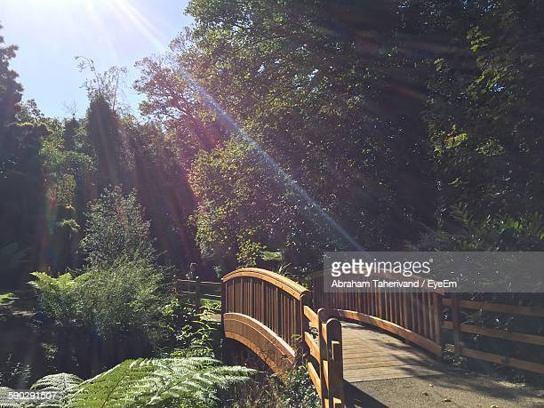 Footbridge By Trees In Garden