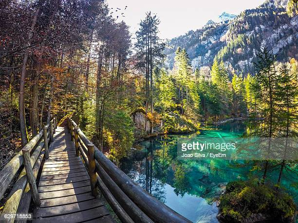 Footbridge Over Blausee By Trees