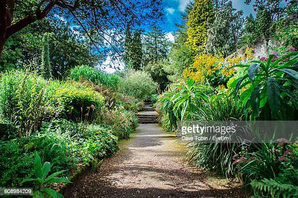 Footpath Amidst Plants In Garden