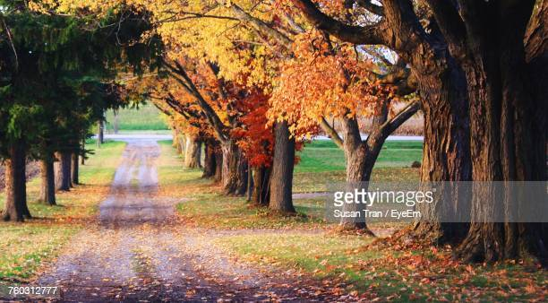 Footpath Amidst Trees At Park During Autumn