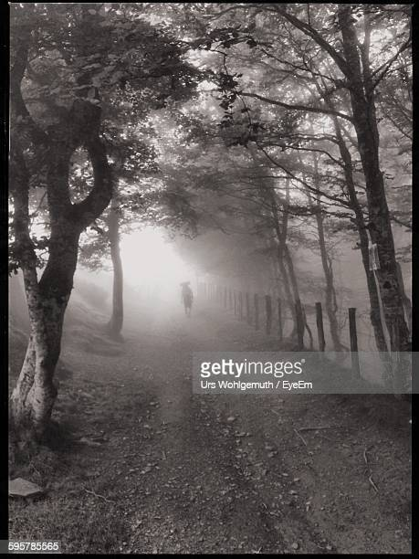 Footpath Amidst Trees During Foggy Weather At Camino De Santiago