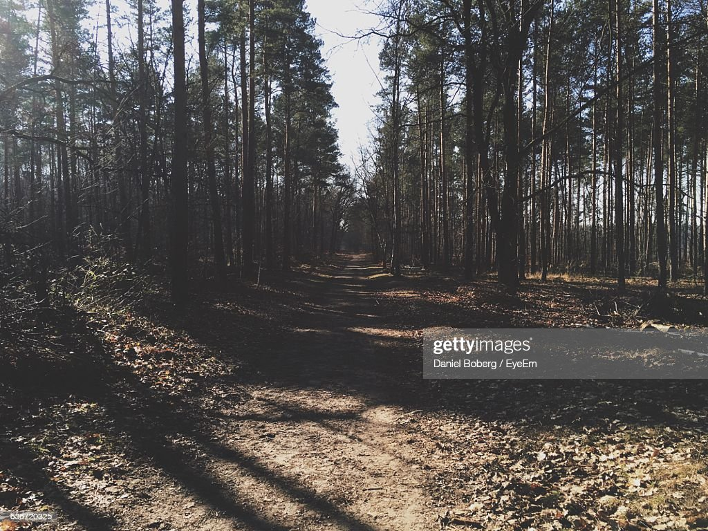 Footpath By Trees In Forest