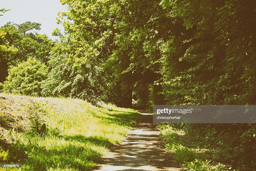 Footpath going through the trees and grass : Stock Photo