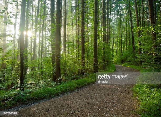 Footpath in a dense forest on a sunny day