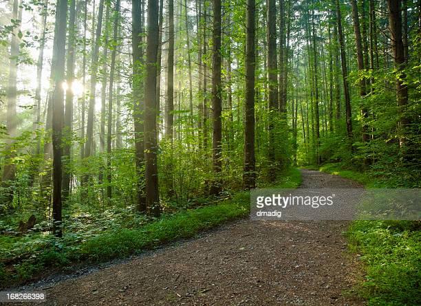 小道から魅惑的な森