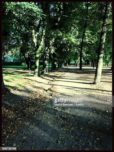 Footpath In Park, Green Trees