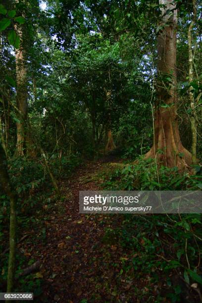 Footpath in the rainforest