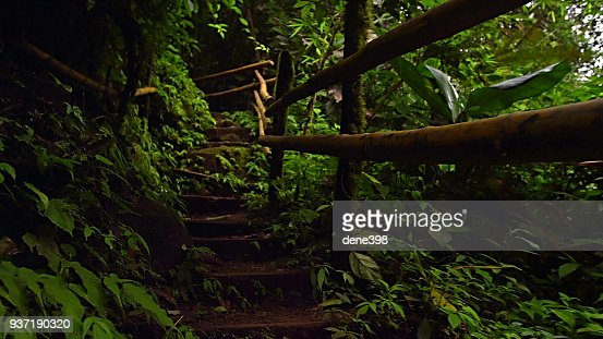 footpath in the rainforest : Stock Photo