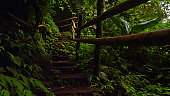 Wooden footpath trail in rainforest, Chiang Mai, Thailand