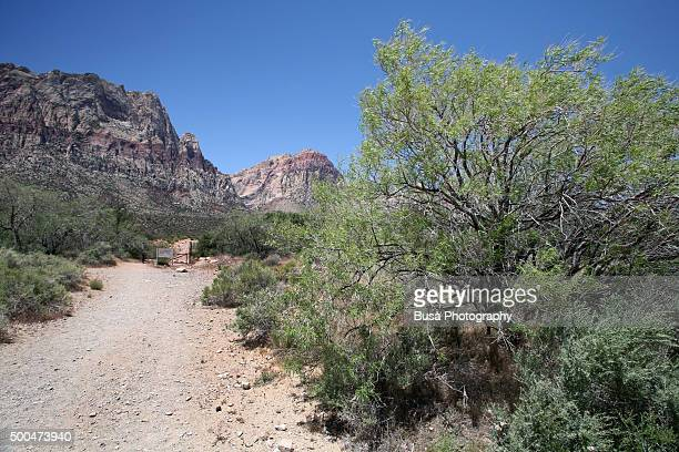 Footpath in the Red Rock Canyon National Conservation Area in Nevada, USA
