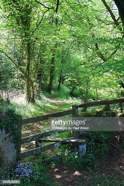 Footpath through a wood