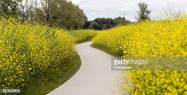 Footpath through Flowers in Oostvaardersplassen, Lelystad, Holland