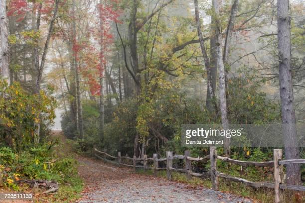 Foresta statale foto e immagini stock getty images for Cabine sospese di rock state park nc