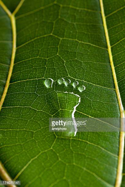 footprint between leaf veins