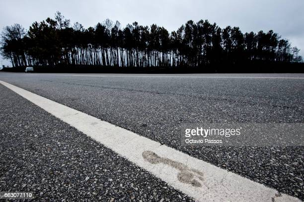 A footprint is seen on the road line during the wildfire is burnt in the village of Oliveira do Hospital Cristina and Marcio a couple around the age...