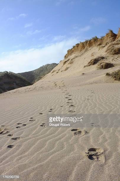 Footprints and paw prints through sand dunes.