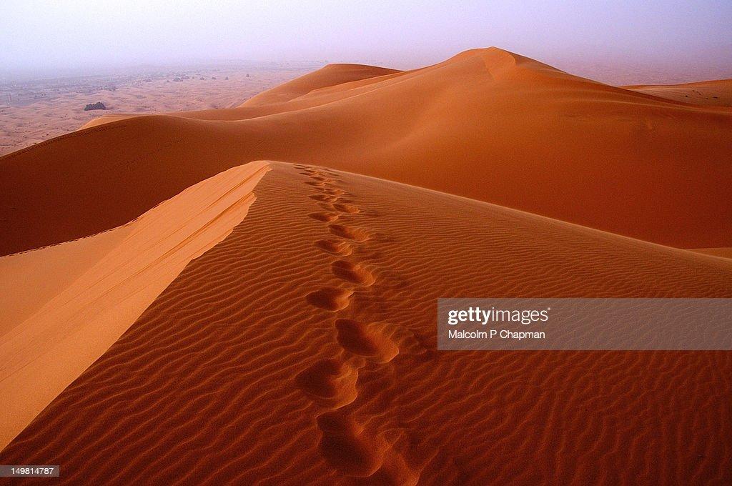 Footprints in desert sand : Stock Photo