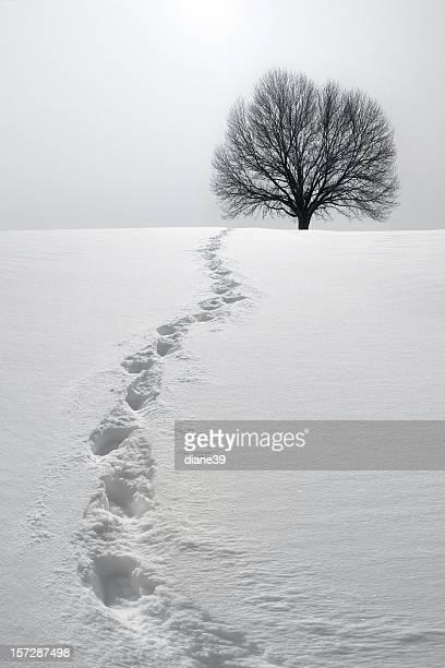 雪の中のフットプリントにつながるツリー