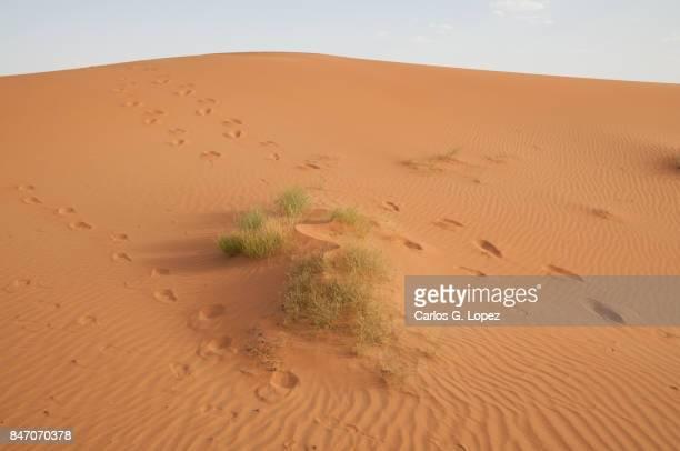 Footprints in the sand of the Sahara Desert