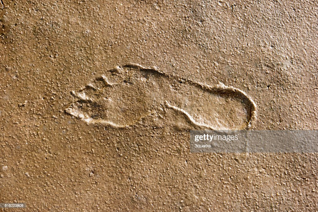 Footprints in the Wadden Sea : Stock Photo