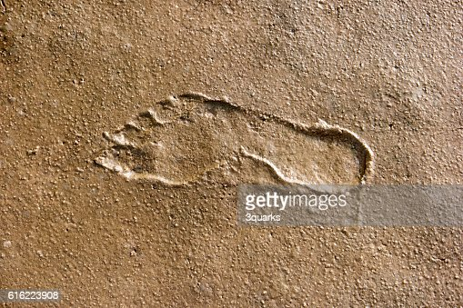 Footprints in the Wadden Sea : Foto stock