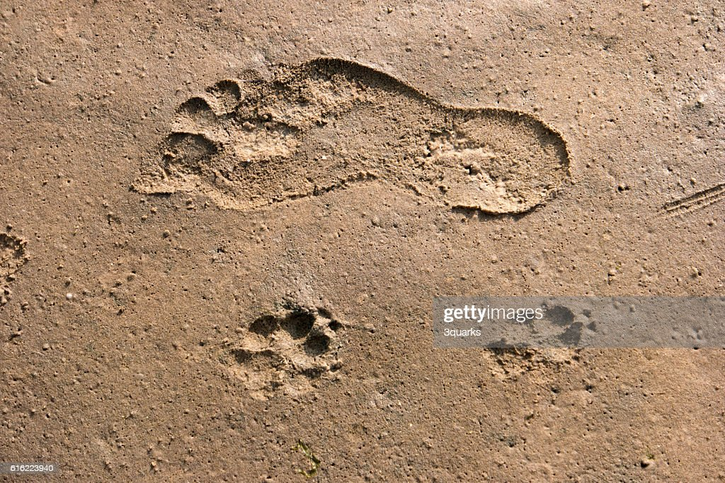 Footprints in the Wadden Sea : Stock-Foto