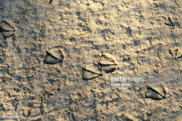 footprints of seagulls